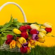 Stock Photo: Tulips in basket colors background. green gras