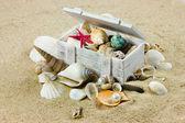 снаряды на песке. морская звезда. сокровище — Стоковое фото
