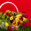 Tulips in basket colors background. green gras — Stock Photo