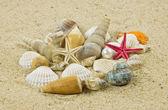 Schelpen op zand. zeester. schat — Stockfoto