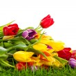 Tulips in basket isolated on white background. colors, green gra — Stock Photo