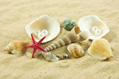 Seashells und starfish on sand — Stock Photo