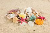 Seashells und starfish on sand — Zdjęcie stockowe