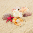 Seashells und starfish on sand — Foto Stock