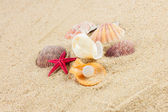 Seashells und starfish on sand — Stock Photo