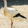 Stock Photo: Stork wildlife