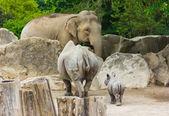 Jardim zoológico do elefante bebê rinoceronte rinoceronte — Foto Stock