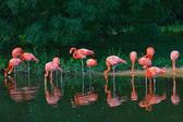 Zoológico de flamingos cor de rosa — Foto Stock