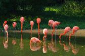 Flamingo's roze dierentuin — Stockfoto