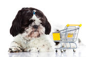 Shih tzu with shopping trolly isolated on white background dog — Stock Photo