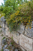 Flowers wall — Stock Photo