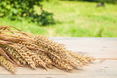Wheat spike — Stock Photo