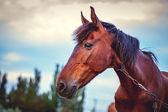 Beauty Horse — Stock Photo