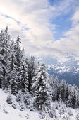Winter forest in Alps — Stok fotoğraf