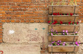 Boxes with garden flowers on a brick wall — Stock Photo