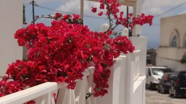 Lovely red flowers on balcony, Santorini. Greece. — Video Stock