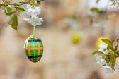 Tartan Egg (low DOF) — Stock Photo