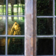 The Queen through the Window — Stock Photo #31066147