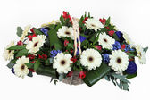 Arrangement of white, red and blue plants. — Stock Photo