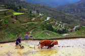 Rice terraces. Chinese farmer tills the soil on the paddy field. — Stock Photo