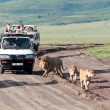 Jeeps with tourists traveling on the road for a pride of lions, Ngorongoro National Park, Tanzania. — Stock Photo