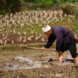 Chinese peasant cultivates rice field hoe. — Stock Photo