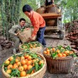 Chinese farmers unload truck with oranges in wicker baskets, Gua — Stock Photo #30945989