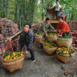 Stock Photo: Chinese unload truck of oranges that are in wicker baskets.