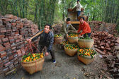 Chinese unload truck of oranges that are in wicker baskets. — Stock Photo