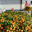 Chinese are discharged from box oranges, fruit in large pile — Stock Photo #31025925