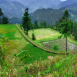Agricultural spring landscape in the mountainous, rural, south west China. — Stock Photo