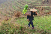Asian farmer in traditional Chinese hat, among the rice terraces — Stock Photo