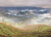 Spring fog in mountains of southwestern China, rice terraces, farmhouses. — Stock Photo