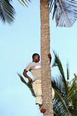 African man, about 25 years old, climbed a palm tree. — Stock Photo