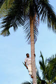 One young African man is on top of coconut tree. — Stock Photo