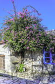 Bougainvillea in Old Datca road — Stock Photo