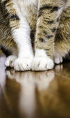 Cat showing just the legs and feet. — Stock Photo