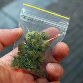Marihuana — Stock fotografie