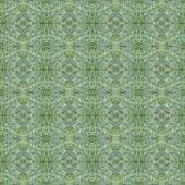 Grass — Stock Photo