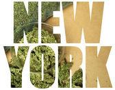 Medical Marijuana, New York — Stock fotografie