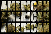 American Recreational and Medicinal Marijuana Industry — Stock Photo