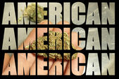 American Marijuana Industry — Stock Photo
