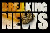 American Marijuana Industry — Stock Photo