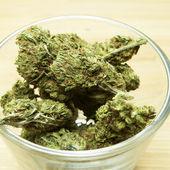 марихуана — Стоковое фото