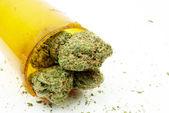 Fond de marijuana cannabis, blanc — Photo