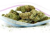 Marijuana and Cannabis, White Background — Stock Photo