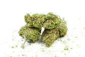 Maconha e cannabis, fundo branco — Fotografia Stock