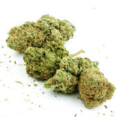 Fondo de marihuana — Foto de Stock