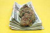 Marijuana and Money — 图库照片
