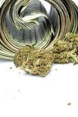 Marijuana and Money — Stock fotografie